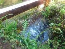 山から流れてきたお水
