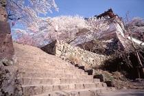 春のお城山その3