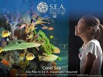 シーアクアリウム:珊瑚海