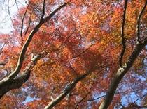 『紅葉まつり』