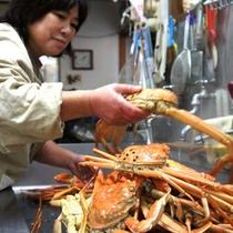 ズワイ蟹の調理作業
