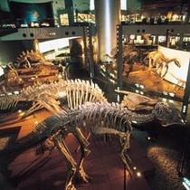 恐竜博物館内観