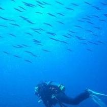【夏】体験ダイビングでお魚たちと一緒に泳ぐ、キラキラの世界☆