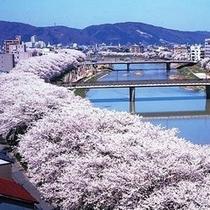 日本さくら百選に選ばれた足羽川のさくら並木
