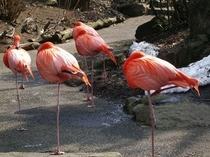 シャボテン公園のフラミンゴ