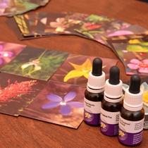 """*エステサロン""""大山""""/植物のパワー漲るエッセンシャルオイルで、肌本来の美しさを取り戻します。"""