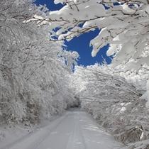 山頂への道(冬)