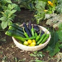 *【シェーヌファーム】お料理は、ファームで採れたた野菜も使っています(イメージ)