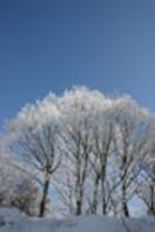 (冬)樹氷