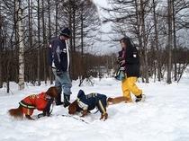 スノーシューで雪遊びプラン