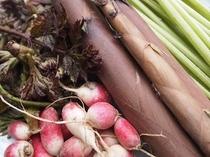 信州白馬の新鮮野菜