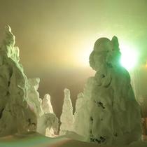*【樹氷原ライトアップ】引き込まれそうな幻想の世界♪