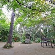 *【中庭】小鳥のさえずり、木々のざわめきに耳を澄ましてください。