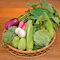 *【ふかほりの野菜たち】敷地内には農園も所有しています。体に染み渡る美味しさです。