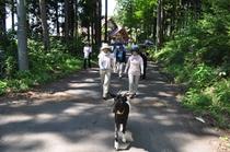 山羊と散歩