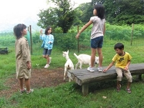 山羊と遊ぶ