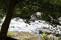 お食事処からは、清流紅池川の眺めれるお席も