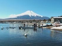 富士山と山中湖と白鳥