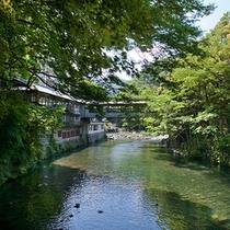 吊り橋 昼景