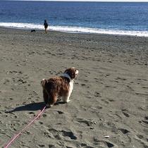 *ペットと宿泊OK/徒歩10分の平塚海岸は最高のお散歩スポット。