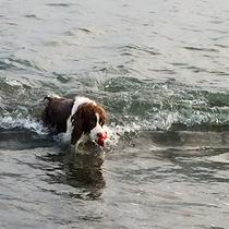 *ペットと宿泊OK/海の中まで元気に走り回る、看板犬のあぽちゃんです。