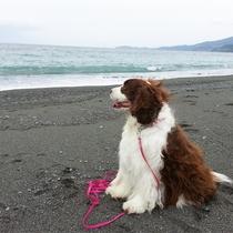 *ペットと宿泊OK/海風を感じてワンちゃんも気持ち良さそう♪