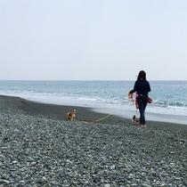 *平塚海岸/当館から徒歩10分、早朝や夕方のお散歩は特におすすめ☆