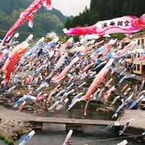 杖立名物「鯉のぼり祭り」