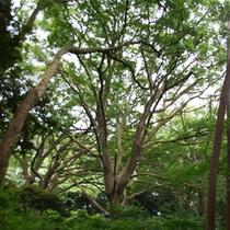 *【周辺】森林の中には遊歩道も整備され、気軽に森林浴を楽しむことが出来ます。