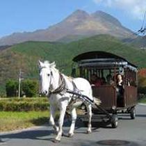 [周辺観光情報]由布岳と辻馬車