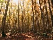 紅葉のブナ林散策も。。9下旬〜10月が見頃