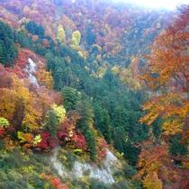 *【周辺】美しい秋の風景をお楽しみ下さい。