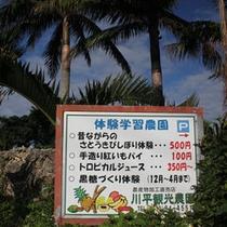 島の農業体験