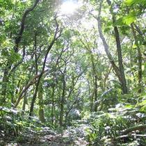 天然記念物の森
