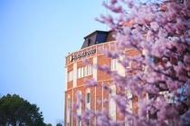 オーベルジュ道後と桜