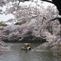 【春の井の頭公園】