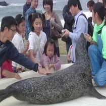 越前松島水族館(アザラシふれあい)