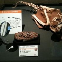 恐竜博物館 10周年特別展例