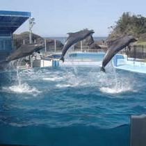 越前松島水族館(イルカショージャンプ)