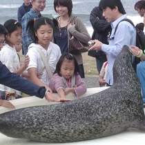 『越前松島水族館』アザラシのふれあい体験!