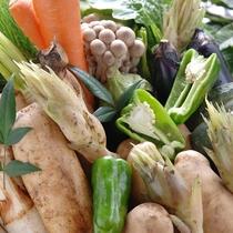 野菜ソムリエの女将が目利きした美味しい福井のお野菜たち