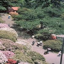 千秋公園 つつじ