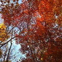 *紅葉/ニセコ周辺の紅葉は9月下旬〜見ごろ!