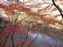 河原の紅葉に・・・♪