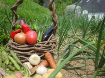 トゥインクルの畑の野菜