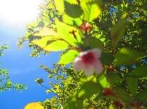 八丁池の桜