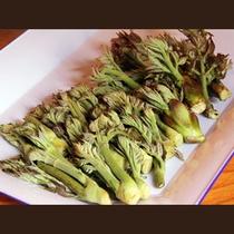 収穫した山菜