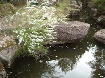 庭園にある池と花