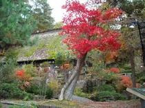 真っ赤な紅葉と合掌造り(25年11月9日撮影)