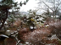 紅白の木(25年11月30日撮影)